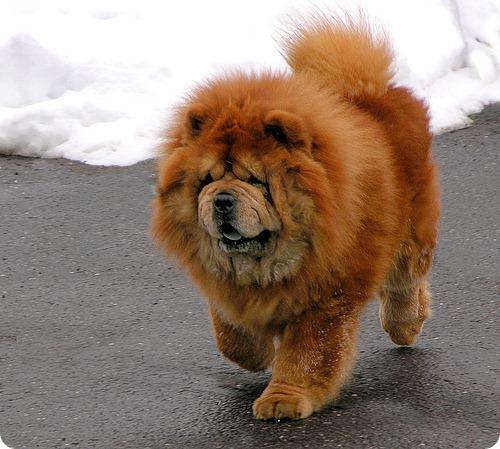 Фото собак самая злая